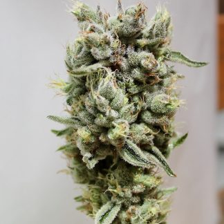 Frosted fruit cookies cannabis seed flower structure