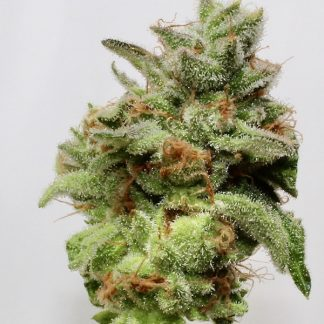 orange skunk cannabis seed flower