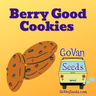 Berry Good Cookies, marijuana seeds, pot seeds, cannabis seeds, weed seeds