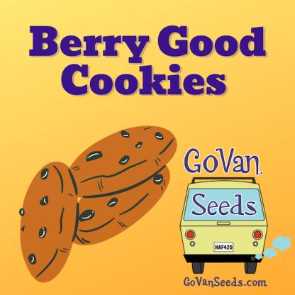 Berry Good Cookies, marijuana seeds, pot seeds, cannabis seeds, weed seeds